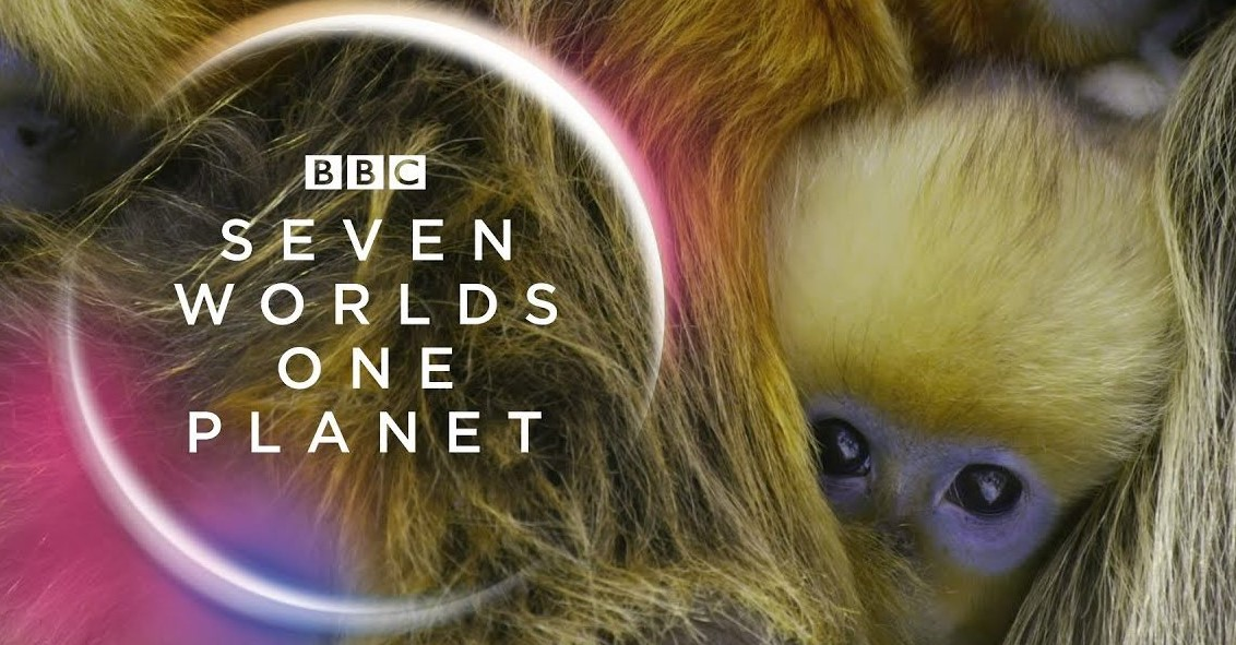 Seven Worlds, One Planet TV Series (2020) | Cast, Episodes | And Everything You Need to Know